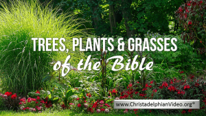 Trees, Plants and Grasses of the Bible 3 Part Video Bible Study Series