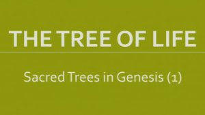 The Tree Of Life Bible Study Boxset New Video Release