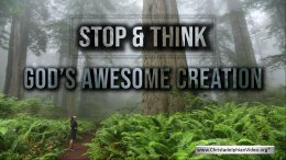 Stop & Think about God's Awesome Creation