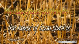 "Daily Readings & Thought for November 30th. ""THE HOUSE OF ESAU STUBBLE"""