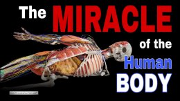 Wow! The Miracle of the Human Body! A stunning video!