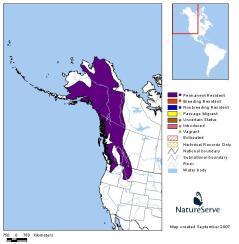 marmot-hoary-rangemap