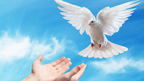 Image result for image of holy spirit