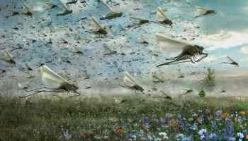 An Army of Locusts