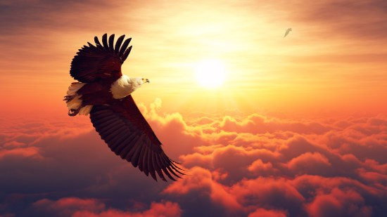 African Fish Eagle flying high above the clouds with sunrise (Di