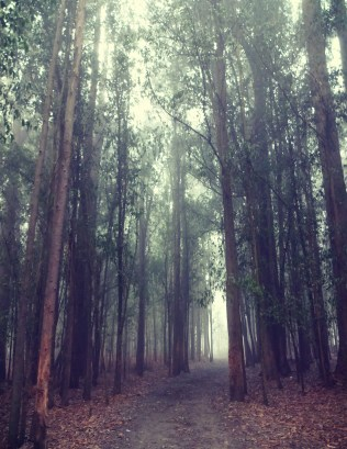 The last big woodsy path.