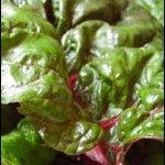 Garden gluts: Silverbeet aka Swiss Chard