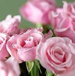 Dầu hoa hồng