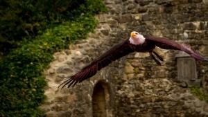 Puy du fou attractions
