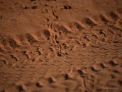 Lizard escape tracks - they would run along the middle of the track before a sharp right angle turn into the bushes (Panasonic zoom 100mm f/2.8)
