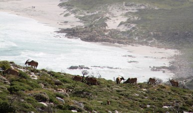 Cape Point and The Cape of Goodhope Nature reserve