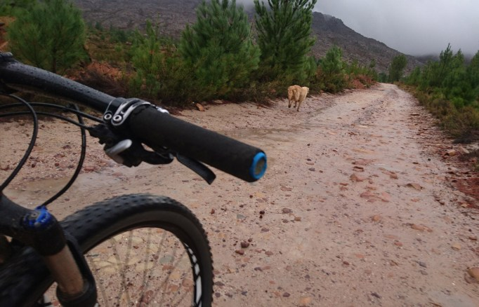 The Matroosberg trail dog in action.
