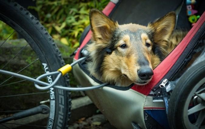 The Best Dog bike trailers