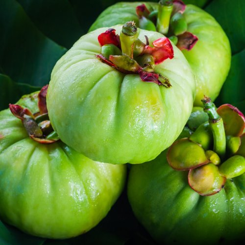 Still life with fresh garcinia cambogia on wooden background. Garcinia is thai herb (south of Thailand) and sour flavor lots of vitamin C. Low key picture style.Closeup