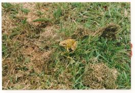 A passing amphibian