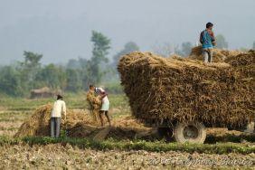 chitwan24