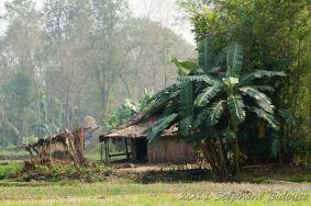 chitwan27