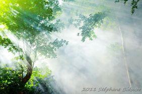thailande_1106-ii