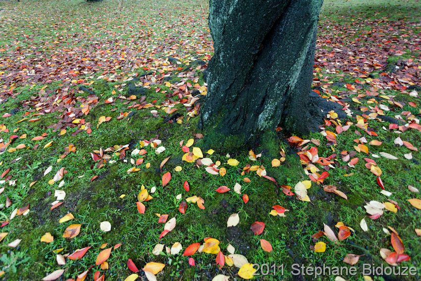 autumn ground colors