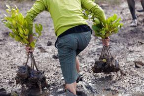 man planting tree