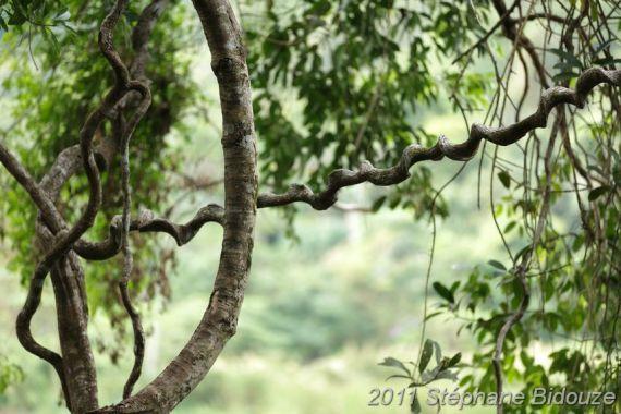 jungle vines detail