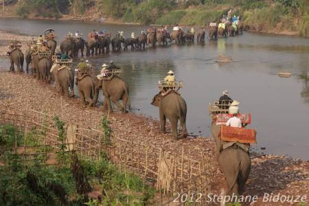 elefantasia119