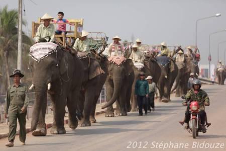 elefantasia125