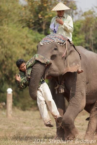 elefantasia129