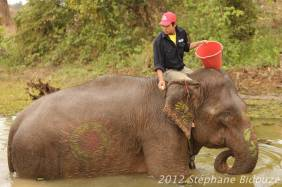 elefantasia273