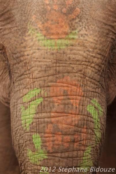 elefantasia278