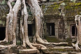 Angkor Ta Prohm temple