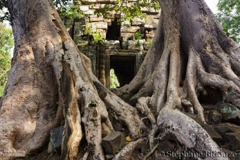 Temple door and roots