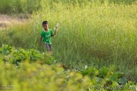 cambodge campagne 2
