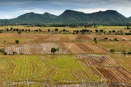 Les rizières au pied du temple
