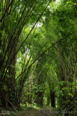 erawan-bamboo