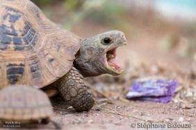suan-mon-village-turtle
