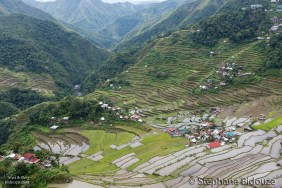 batad-rice-field