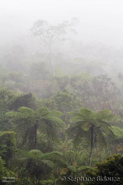tree-ferns-fog