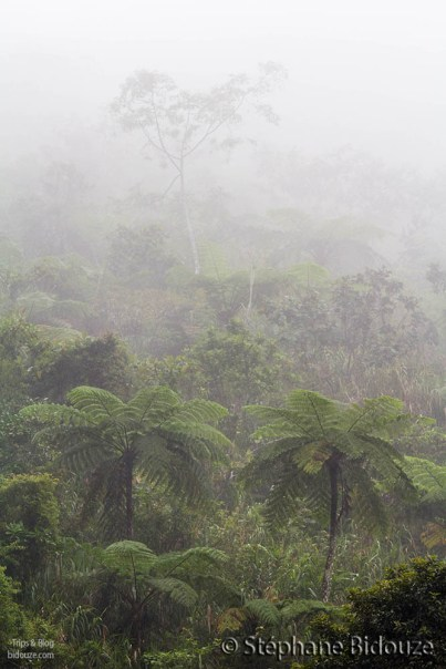 tree-ferns-fog
