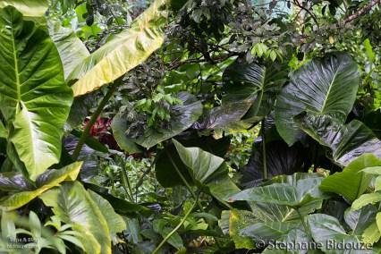 eagle-center-davao-vegatation