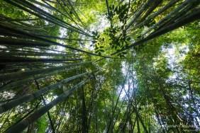 bambou-foret-thailande