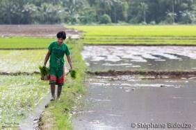 plantation-riz-palawan