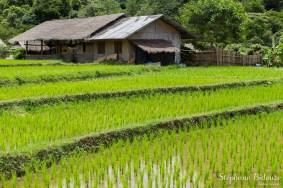 Mae-Klang-Luang-village-riz