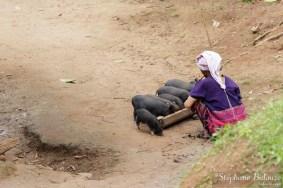 karen-femme-cochons