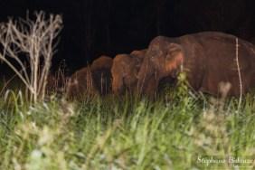 safari-khao-yai-elephant-thailande
