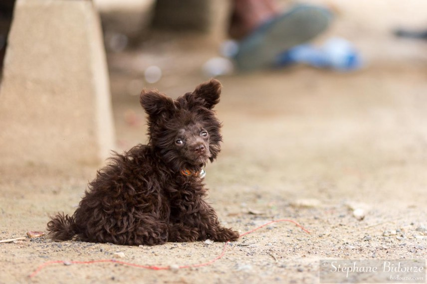 chien-etrange-thailande-comique-