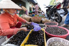 escargots-mekong-vendeur-vietnam