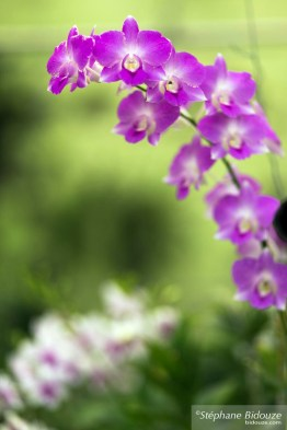 Orchid in the tropical garden