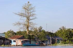 arbre-village-rivière-vietnam