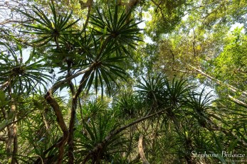 dracena-plante-jungle-foret-vietnam